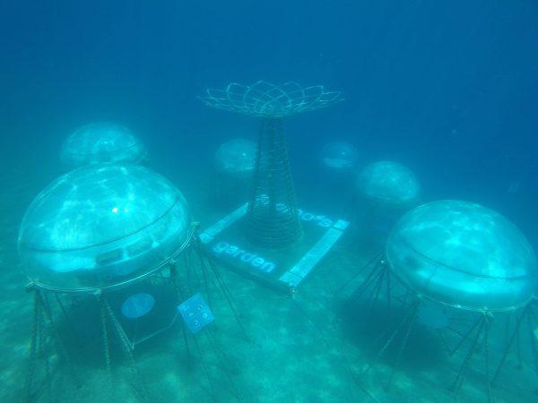 Snorkeling nemo's garden