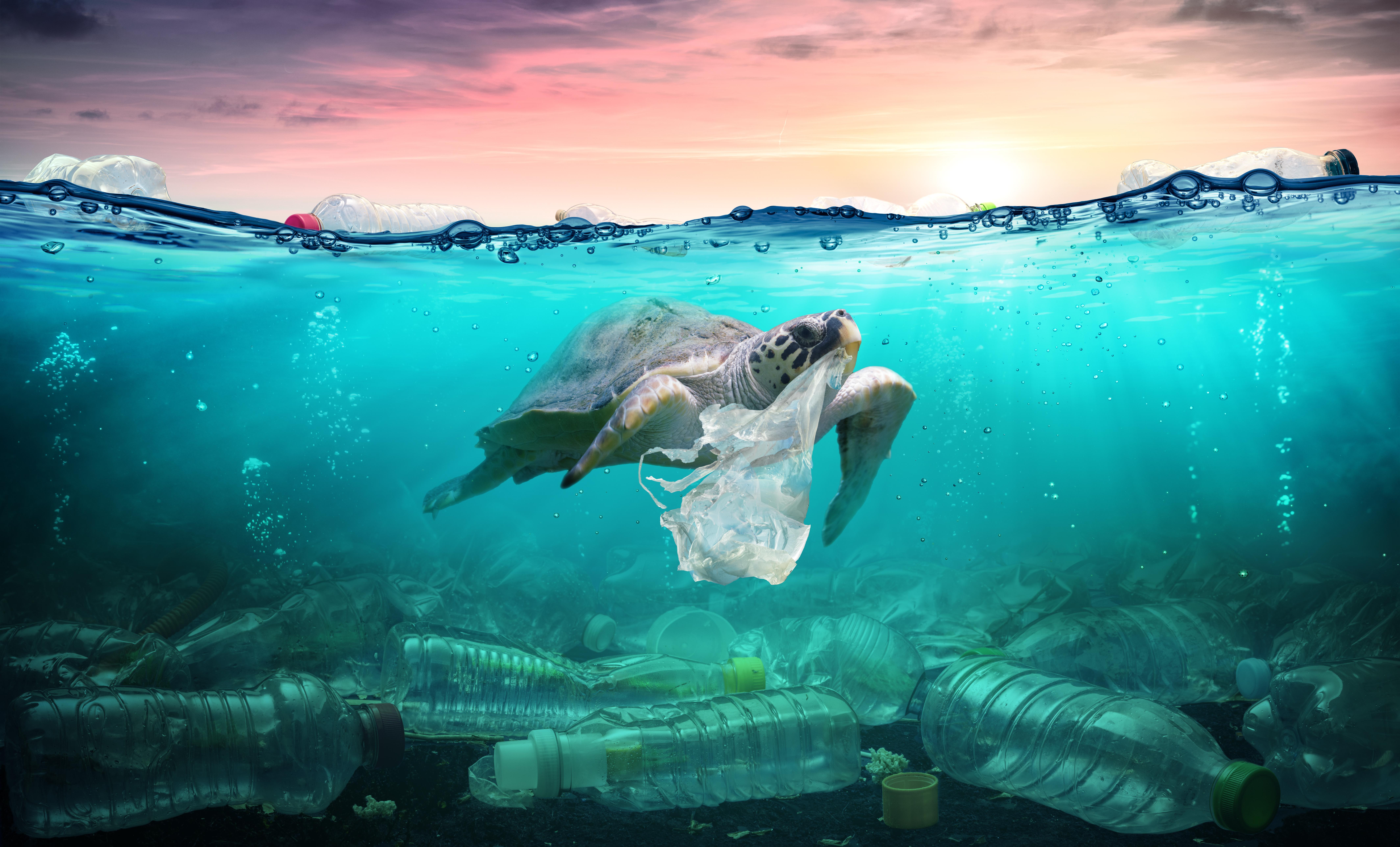 Plastic pollution,  marine litter, plastica, mare, microscopio